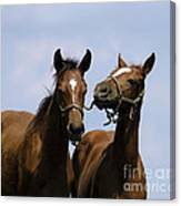 Horse Foul Play Iv Canvas Print