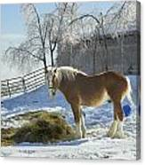 Horse On Maine Farm After Snow And Ice Storm Canvas Print