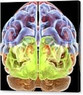 Human Brain Anatomy, Artwork Canvas Print