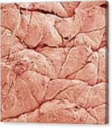 Human Skin, Sem Canvas Print
