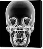 Human Skull, X-ray Artwork Canvas Print
