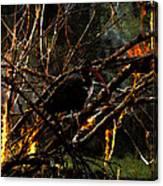 Ibis At Dusk Canvas Print