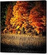 Indiana Autumn Canvas Print