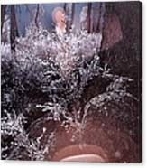 Infrared Flare Canvas Print
