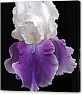 Iris 3 Canvas Print