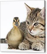 Kitten And Duckling Canvas Print
