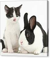 Kitten And Dutch Rabbit Canvas Print