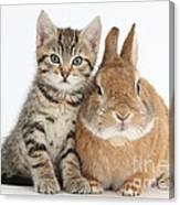 Kitten And Netherland Dwarf-cross Rabbit Canvas Print