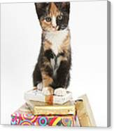 Kitten On Packages Canvas Print