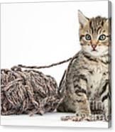 Kitten With Yarn Canvas Print