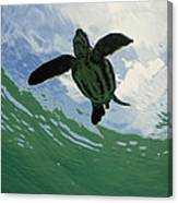 Leatherback Sea Turtle Dermochelys Canvas Print
