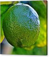 Lemon On Tree Canvas Print