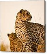 Leopard Panthera Pardus, Arathusa Canvas Print