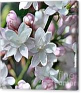 Lilac Named Beauty Of Moscow Canvas Print
