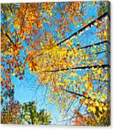 Looking Up At All The Colors Canvas Print