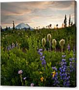 Lupine Sunset Canvas Print