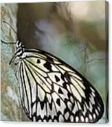 Magical Butterfly Canvas Print