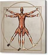 Male Musculature, Artwork Canvas Print