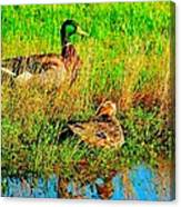 Mallards Canvas Print