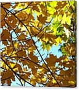 Maple Leaf Canopy Canvas Print