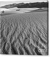 Mesquite Dunes 15 Canvas Print