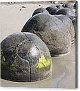 Moeraki Boulders, Koekohe Beach, New Canvas Print