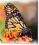 Monarch And Milkweed Canvas Print