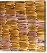 Monarch Butterfly Scales, Sem Canvas Print