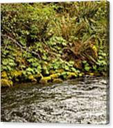 Mossy Riverbank Canvas Print