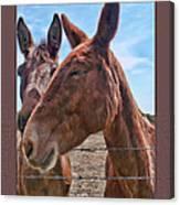 Mule Wink Canvas Print