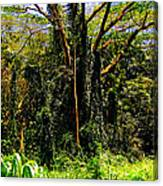Oahu Rainforest Canvas Print