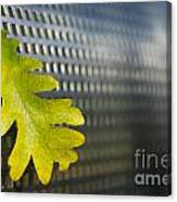 Oak Leaf Canvas Print