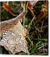 October Rain Drops Canvas Print