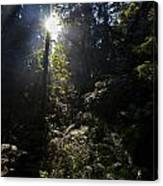 Old Forests At Evo Canvas Print