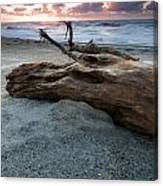Old Tree Trunk On A Beach  Canvas Print