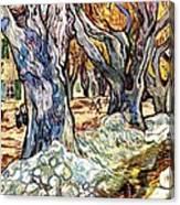 Olive Garden Canvas Print