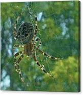 Orb Spider      Summer           Indiana Canvas Print