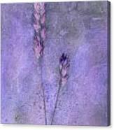 Orchard Grass Canvas Print