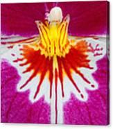 Orchid Closeup Canvas Print