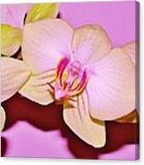 Orchid Love Canvas Print