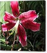 Orienpet Lily Named Scarlet Delight Canvas Print