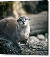 Oriental Small-clawed Otter Canvas Print