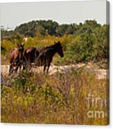 Outer Banks Horses Canvas Print