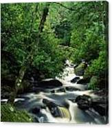 Owengarriff River, Killarney National Canvas Print