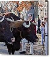 Oxen And Handler Canvas Print