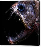 Pacific Viperfish Canvas Print