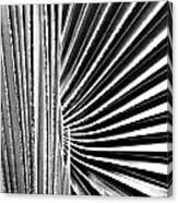 Palmetto Canvas Print