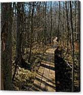 Path Into The Woods Canvas Print