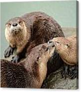 Pelican Creek Otter Family Canvas Print