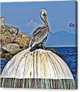 Pelican Power Canvas Print